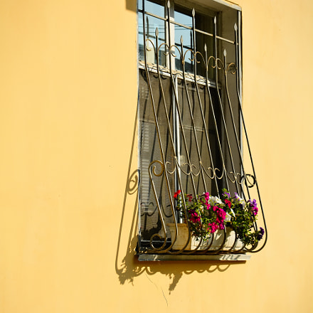 Window and flowers, Nikon D7100, Sigma 24-135mm F2.8-4.5
