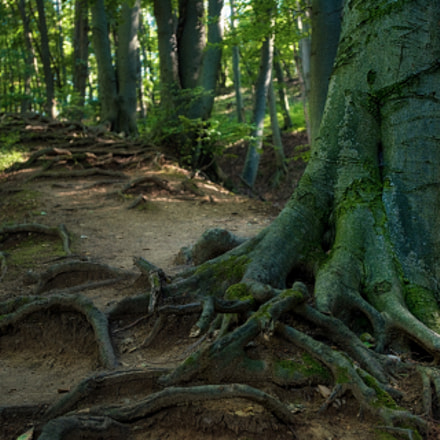 Stairs made of roots, Nikon D5200, AF-S Nikkor 17-35mm f/2.8D IF-ED