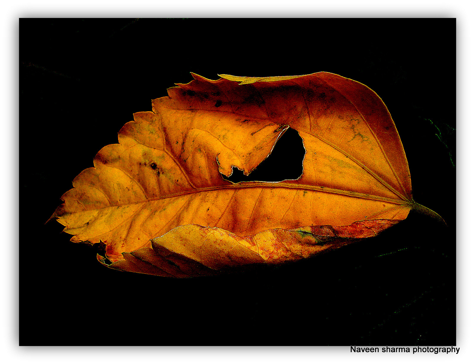 Photograph FALL BEAUTY by naveen sharma on 500px