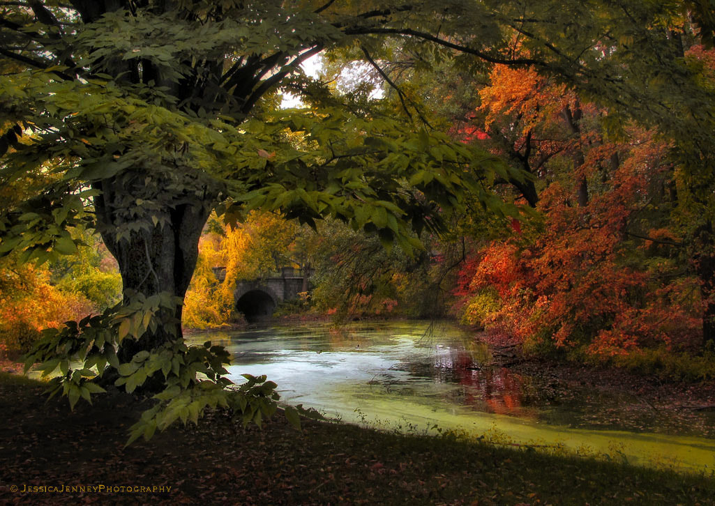 Photograph Autumn Reverie by Jessica Jenney on 500px