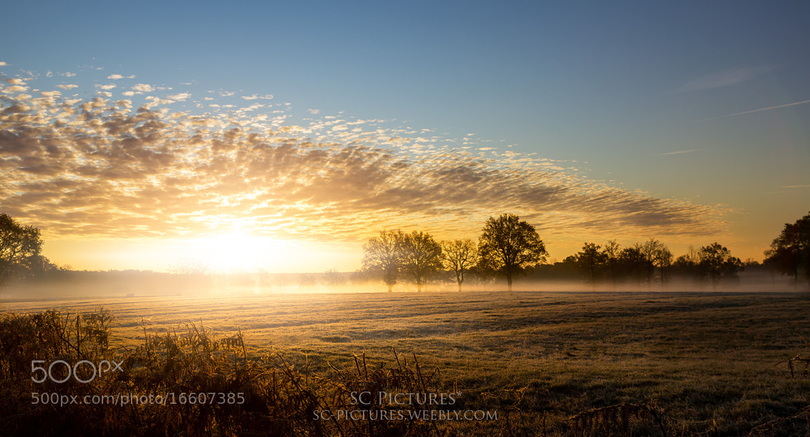 Photograph Sunrise in the cold by SC Pictures* on 500px