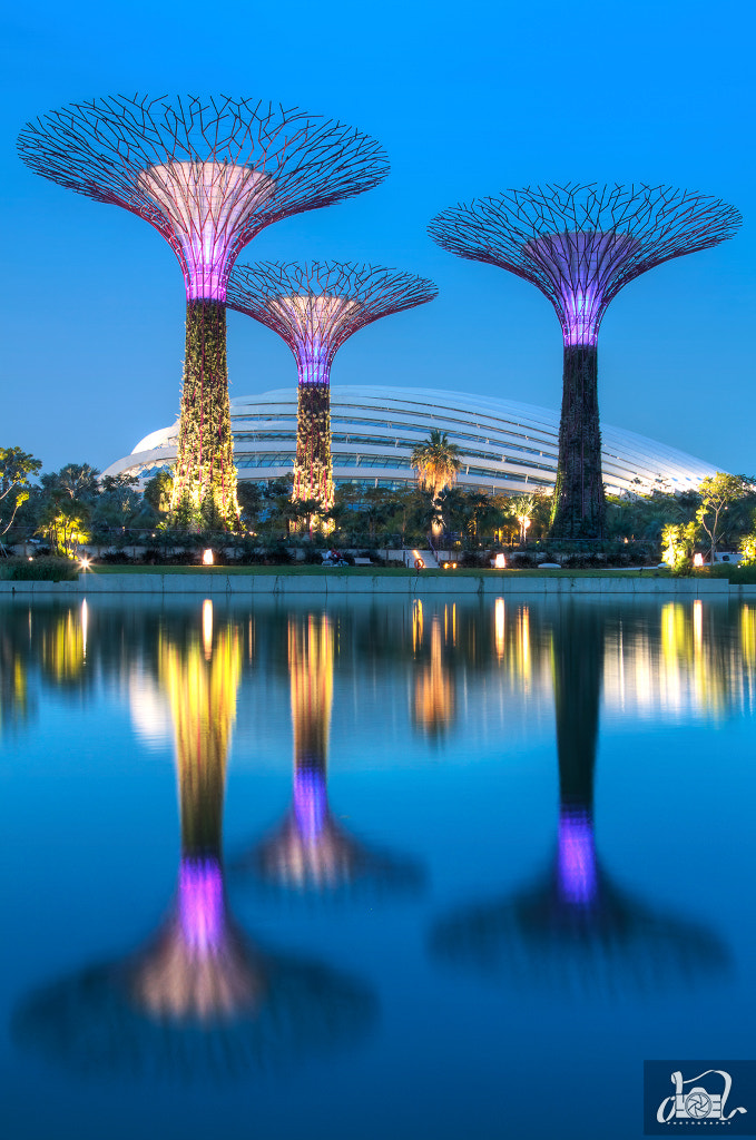 Photograph Singapore Super Trees by Joel Dy on 500px