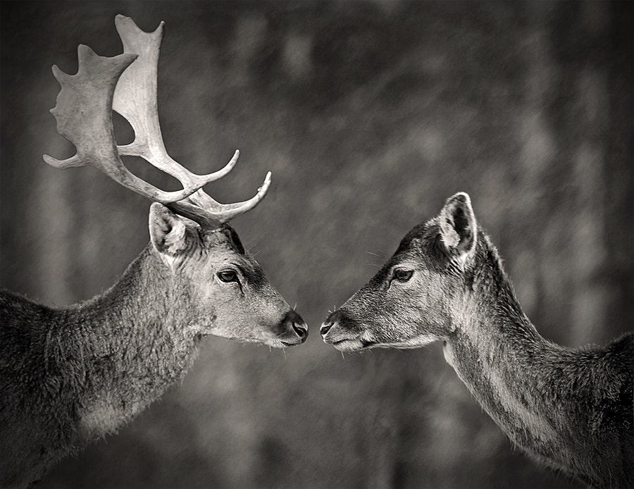 Photograph Give me just a litlle kiss by Gregor Štumberger on 500px