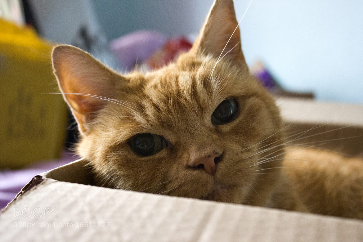 Photograph Ginge by Katie Howey  on 500px