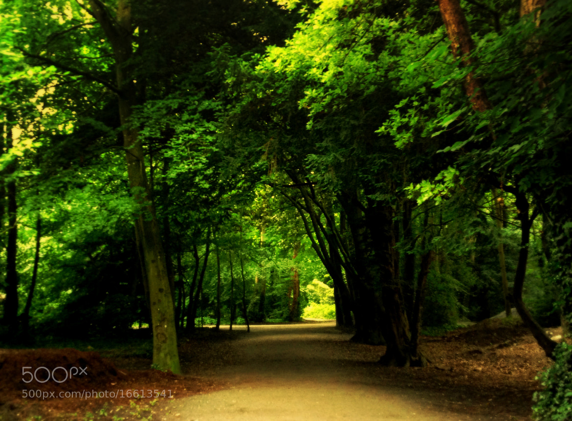 Photograph Green Forest by michele  tortorici on 500px