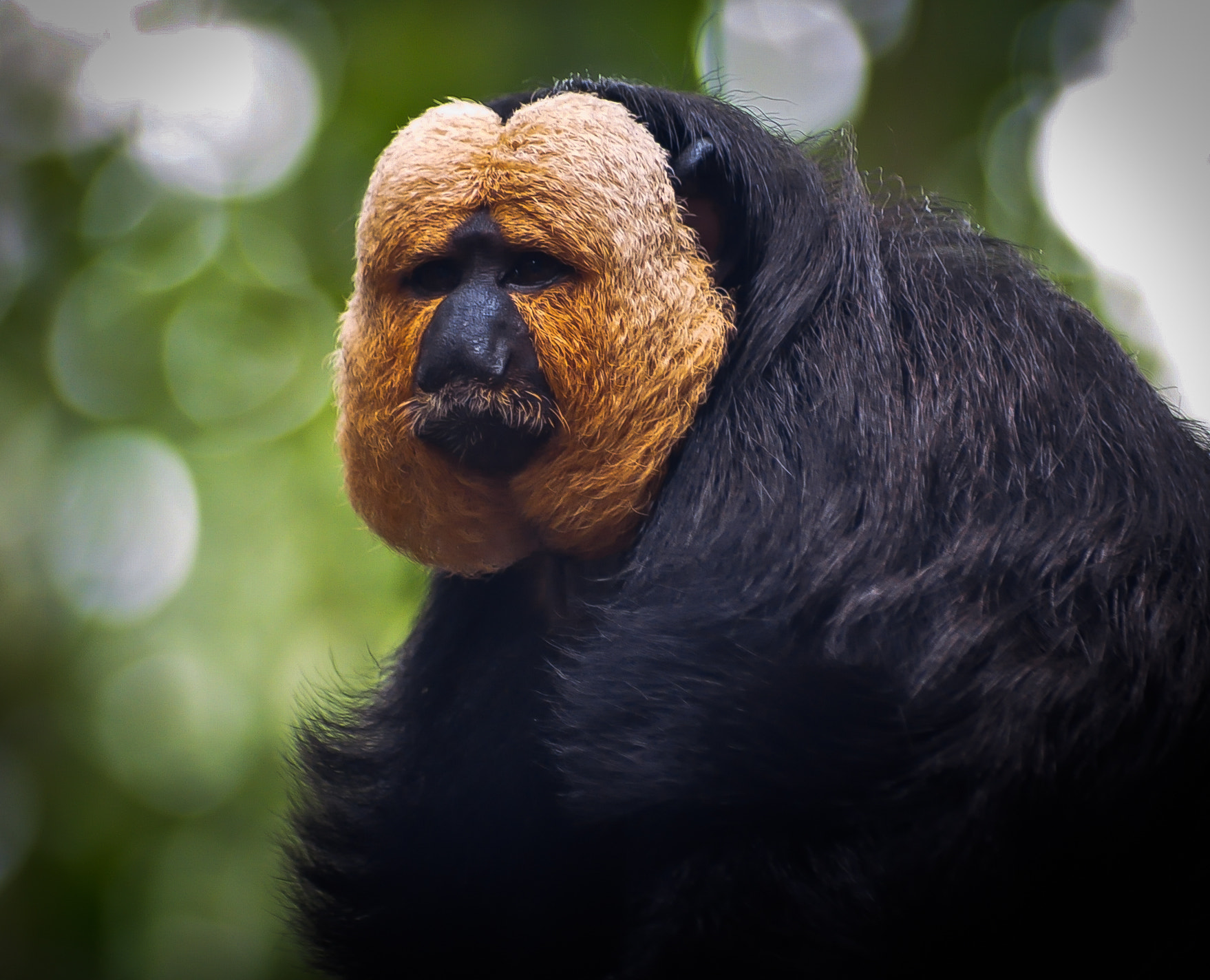 Photograph White Faced Saki Monkey by Xet Ng on 500px