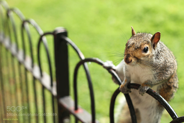 Photograph Hi there! by Nina's clicks on 500px