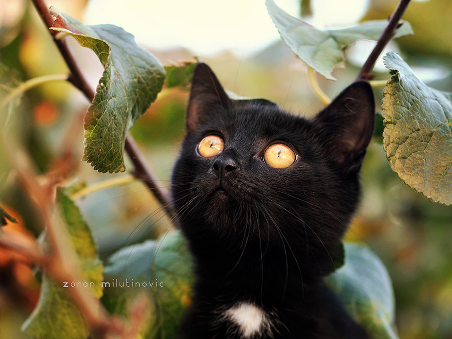 Photograph Staring at the sun by Zoran Milutinovic on 500px