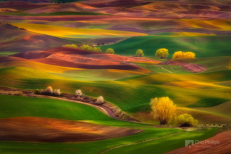 Photograph Sunset Glow, Palouse by Chip Phillips on 500px