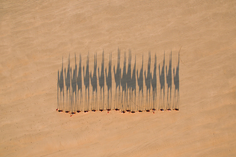 Camel Train by Jarrad Seng on 500px.com