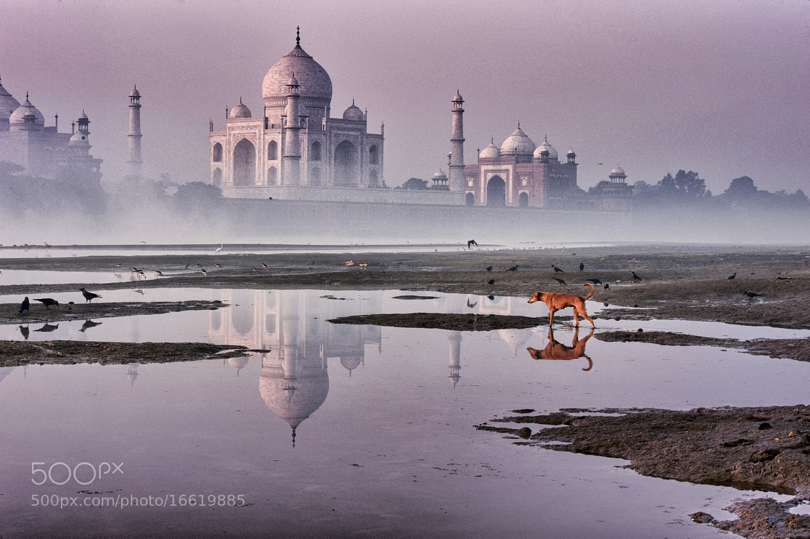 Photograph red dog & TAJ by Yaman Ibrahim on 500px