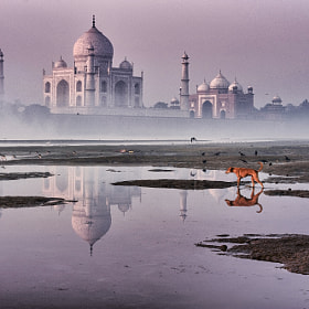 red dog & TAJ by Yaman Ibrahim (yamanibrahim) on 500px.com