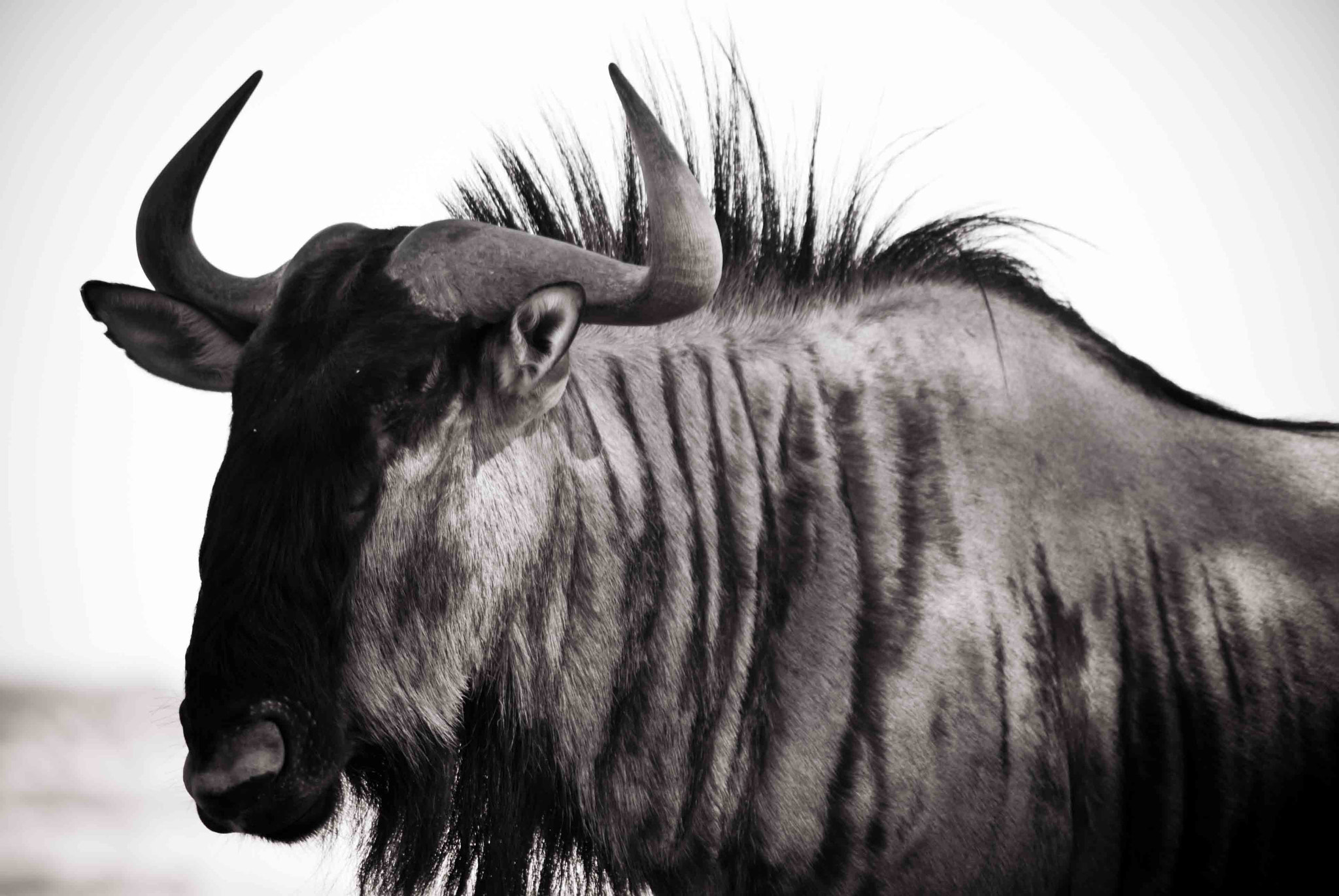 Photograph Wild Beast by Pedré Havenga on 500px