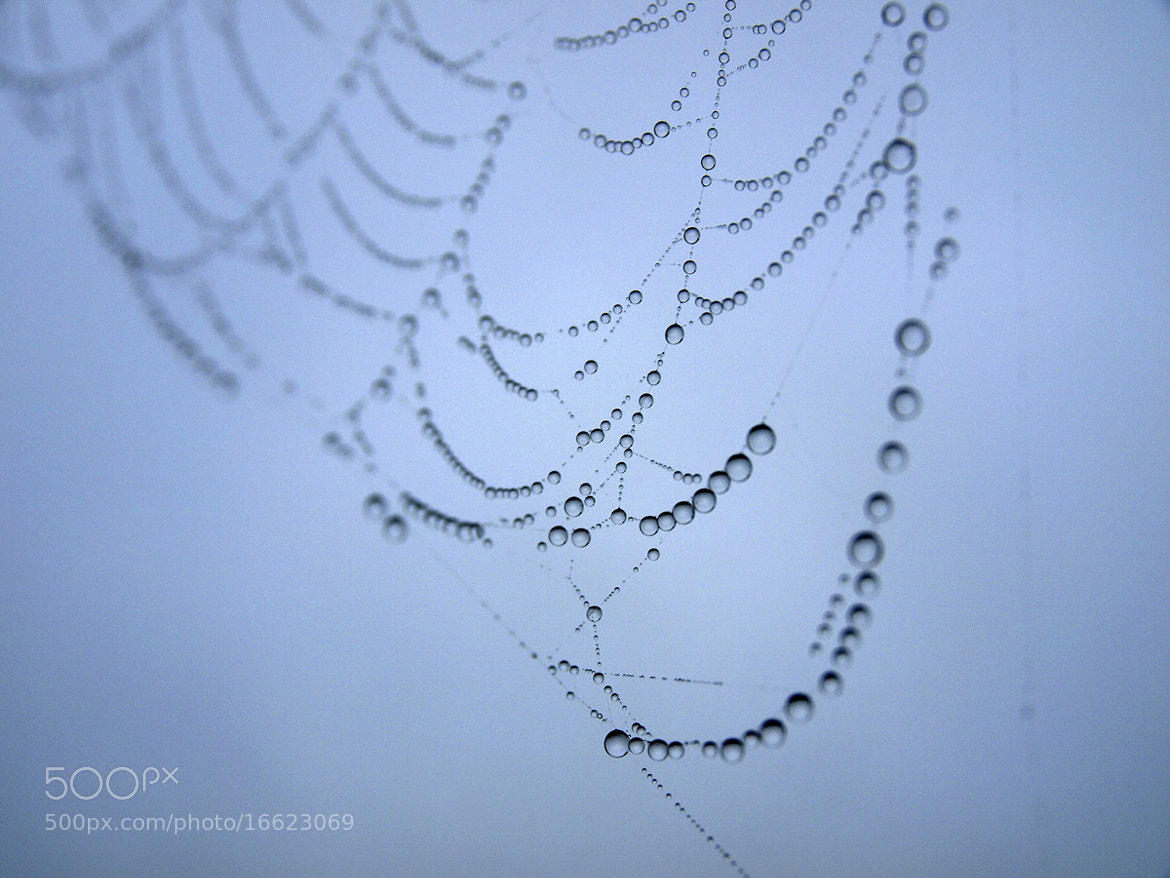 Photograph Web with dew drops by Gabriel Ciora-Márkus on 500px