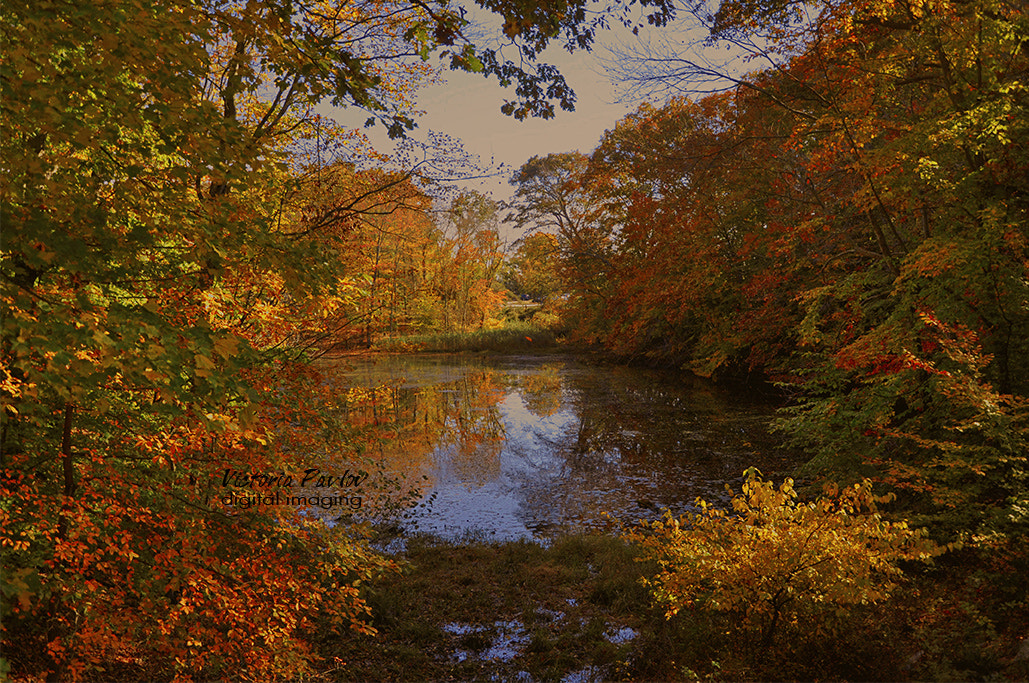 Photograph Fall in CT by Victoria Pavlov on 500px