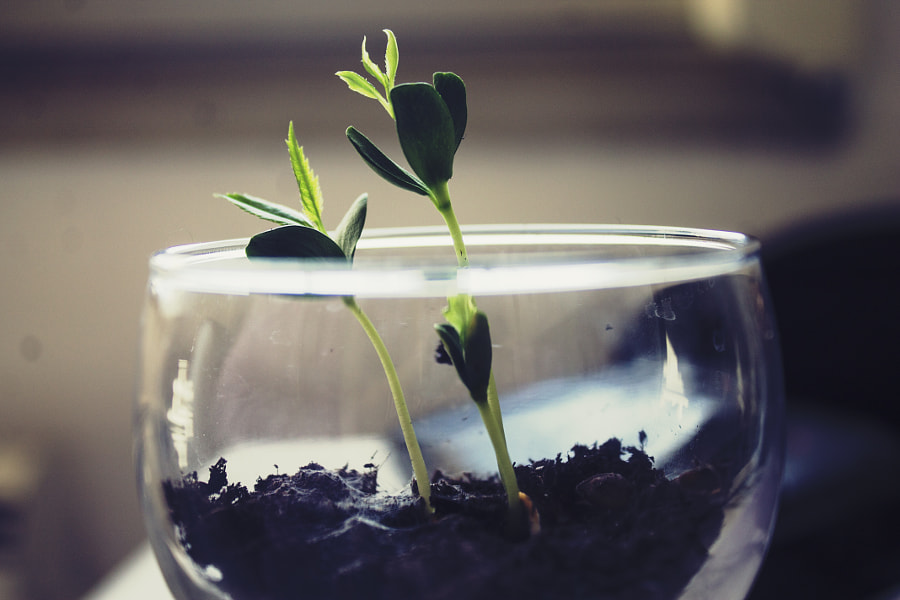 YOung sprout by Alexandra P. on 500px.com
