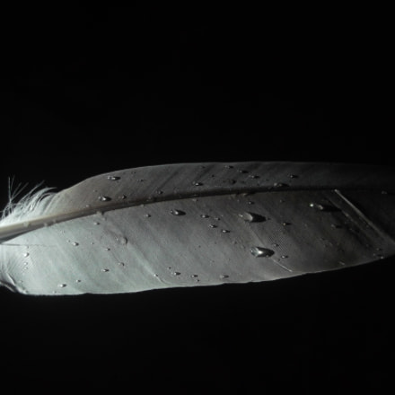 Feather, Fujifilm FinePix JV500
