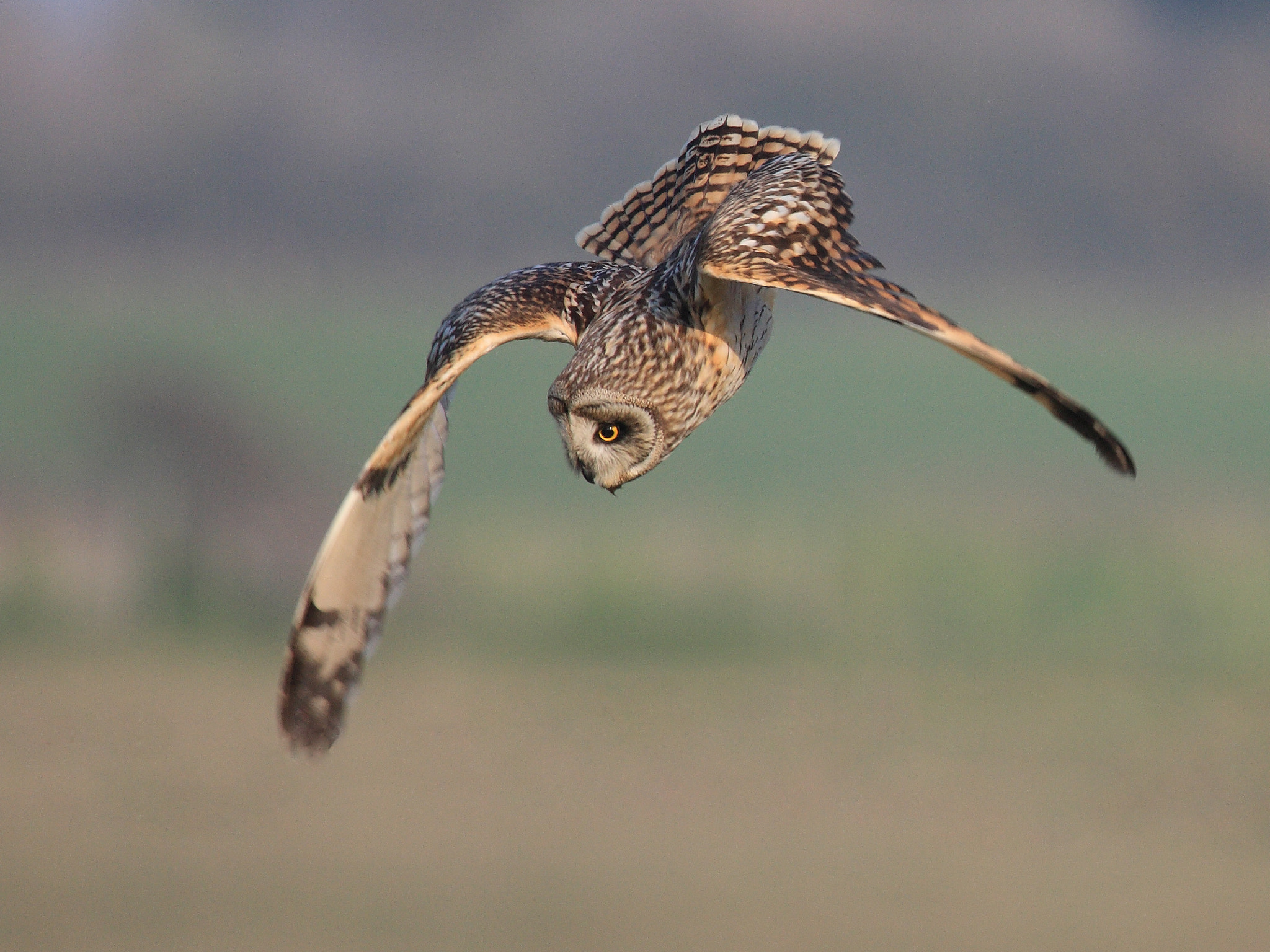 Photograph 'In for the Kill' by Stuart Shore on 500px
