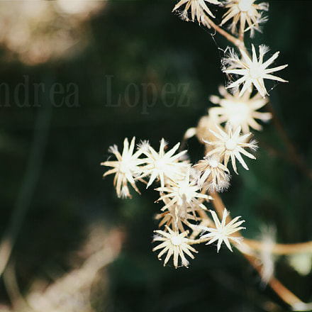 Flower, Canon EOS 1000D, Canon EF 35-105mm f/4.5-5.6