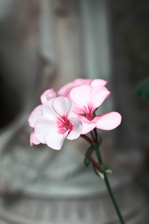 Photograph Flower forgettable  by Huda Al-Naily on 500px