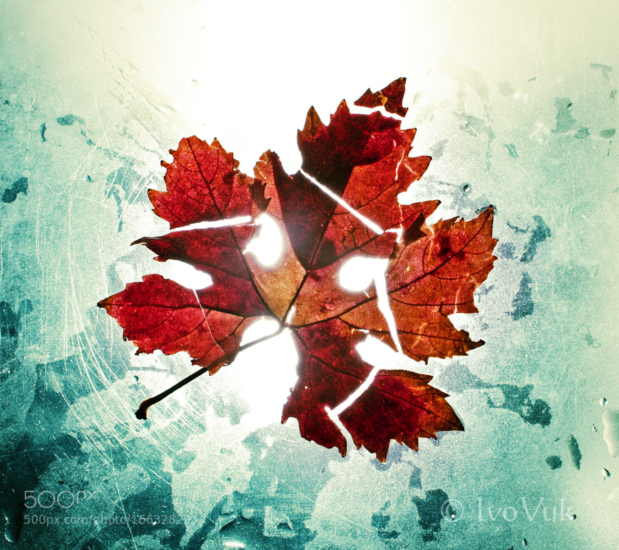 Photograph Autumn by Ivan Vukelic on 500px