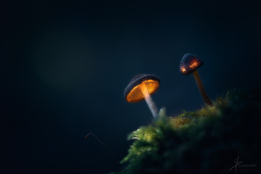 Creatures of Dreamland by Daniel Laan on 500px.com