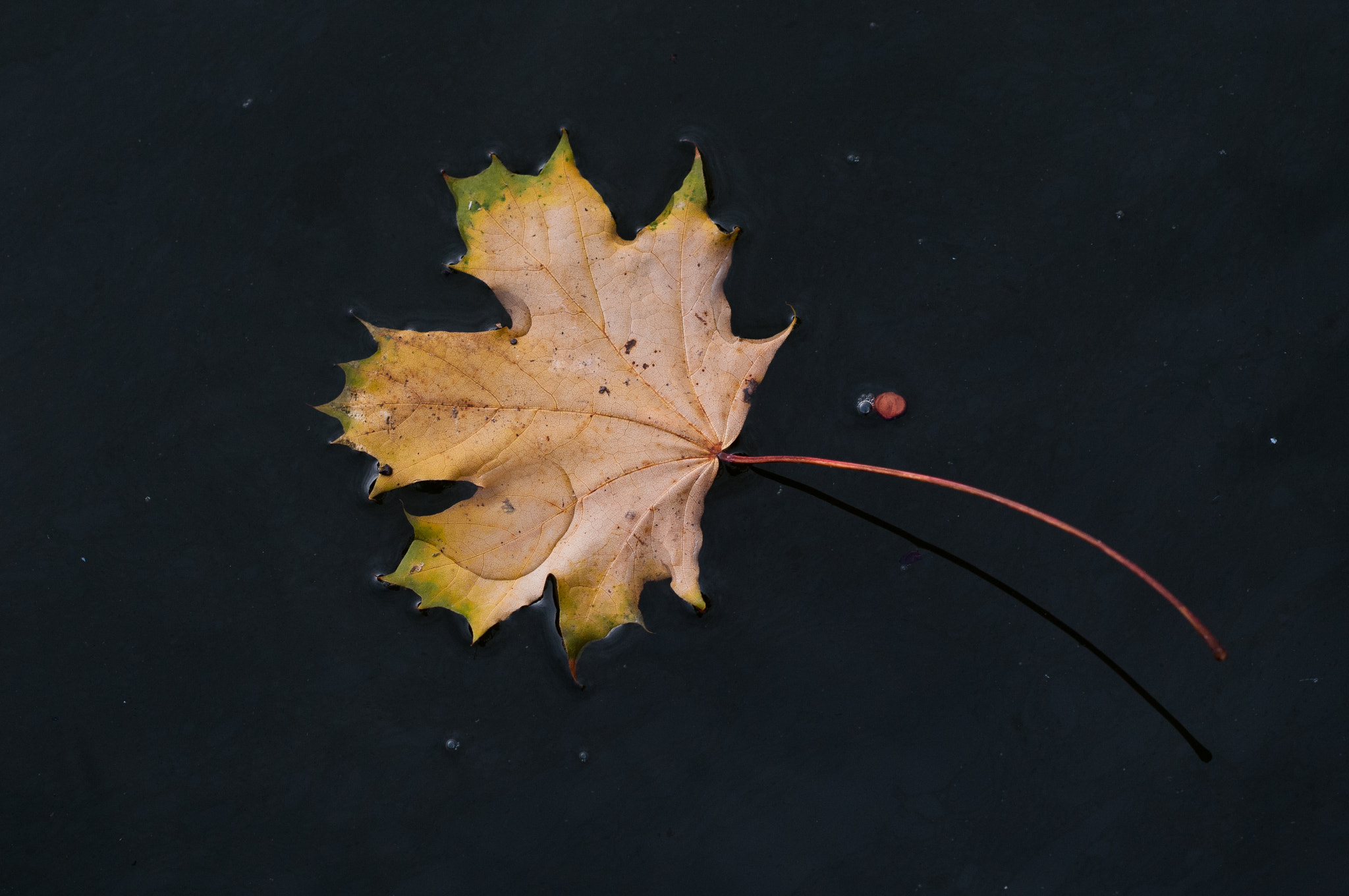 Photograph Herbst by Axel Kuhlmann on 500px