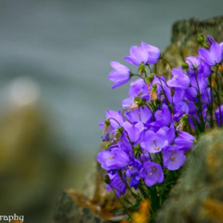 Purple flowers in the rocks