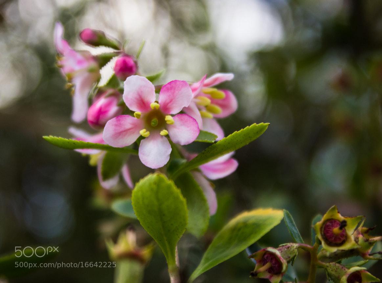 Photograph Five petals by Adam Z on 500px