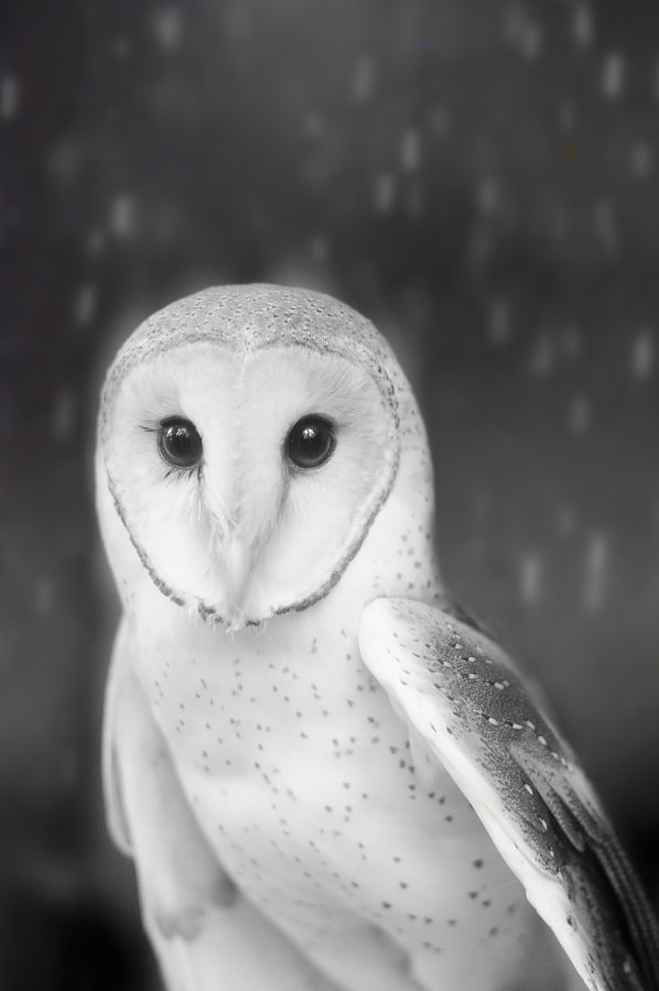 They call me Ghostbird by Sham Jolimie on 500px.com