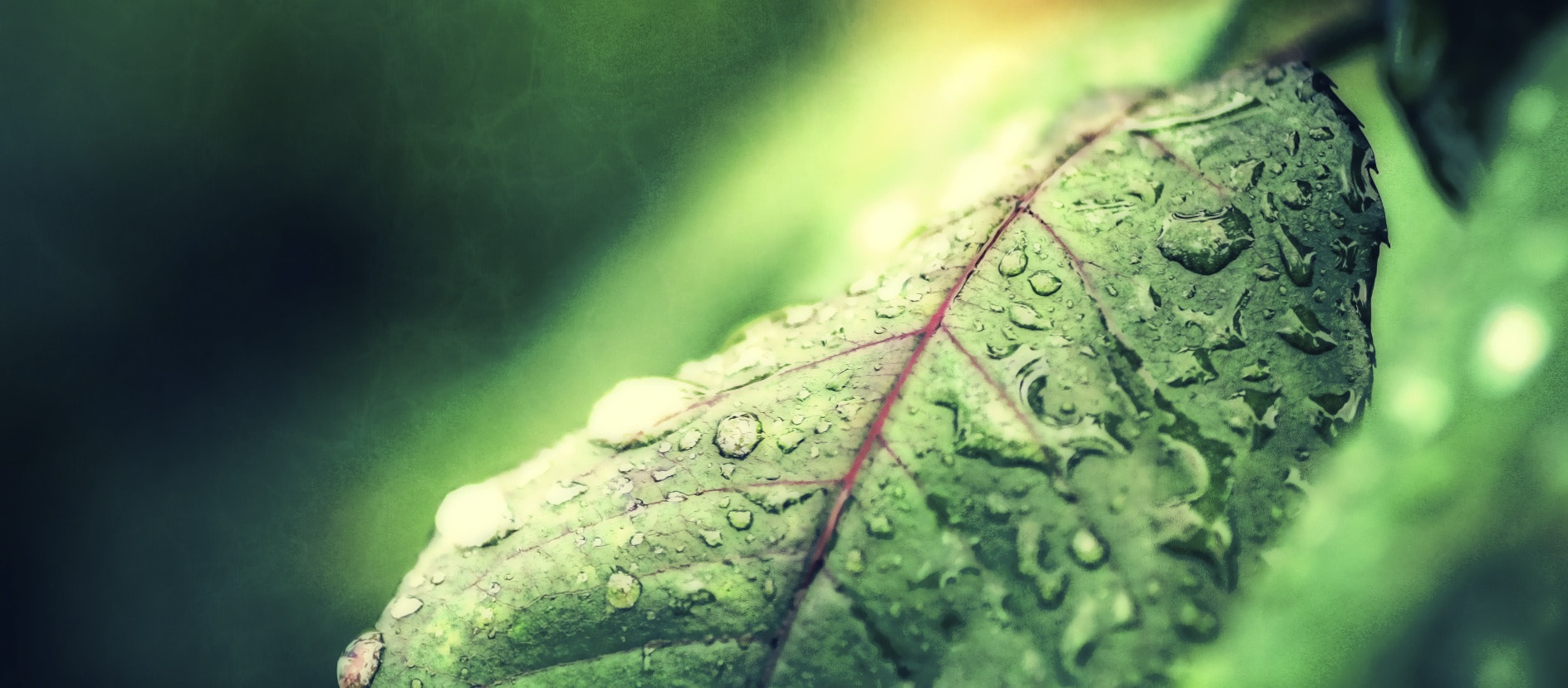 Photograph Green Wet Crazy World by Mauricio Lima on 500px