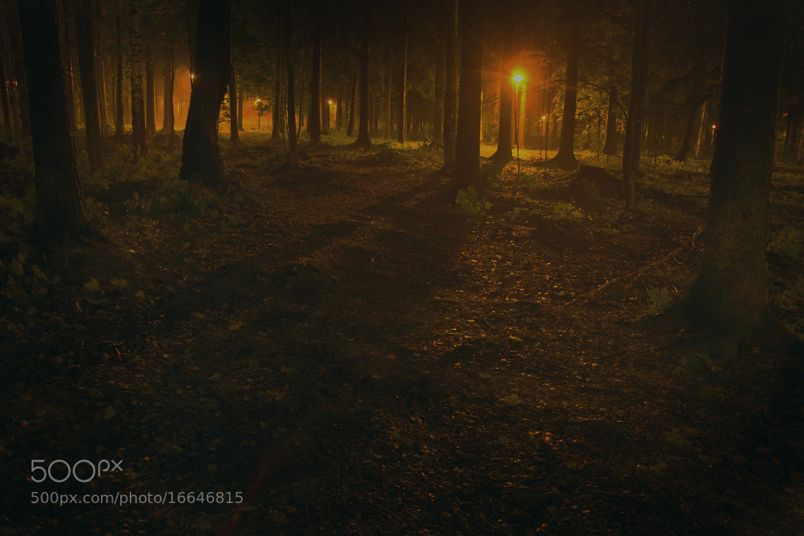 Photograph Light of the Forest by MV Pictures on 500px