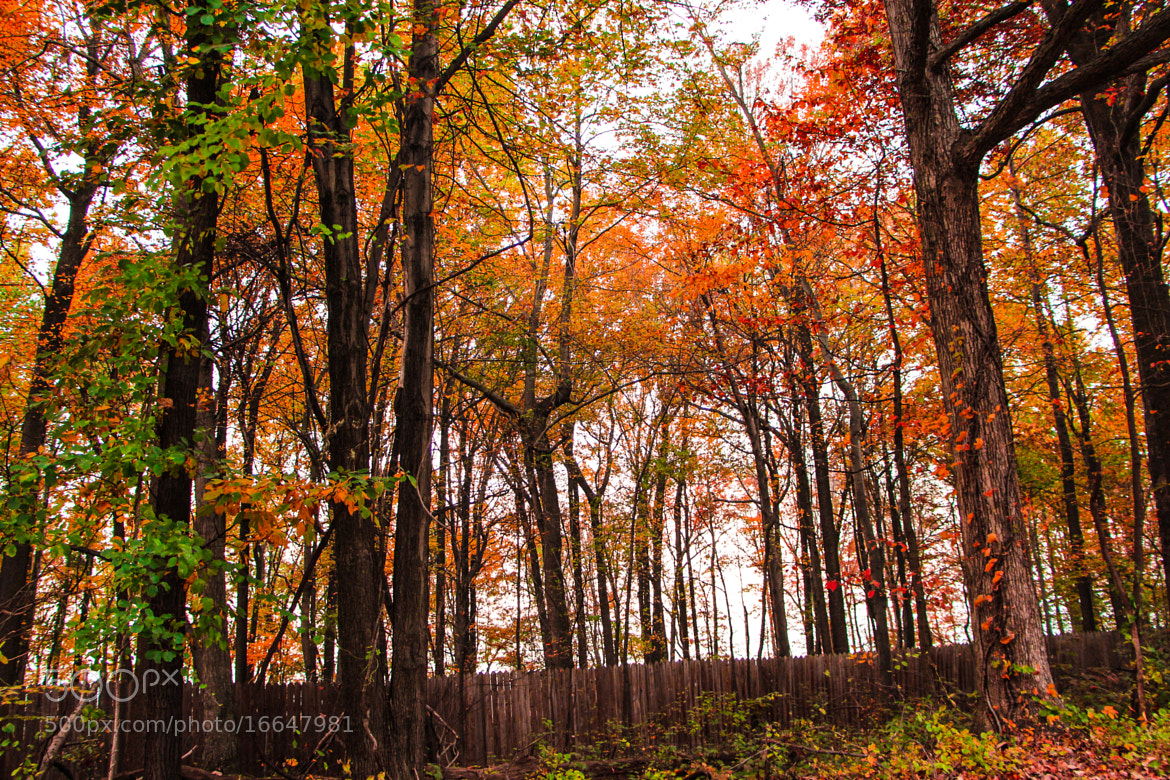 Photograph Fall colors by Surya Suravarapu on 500px