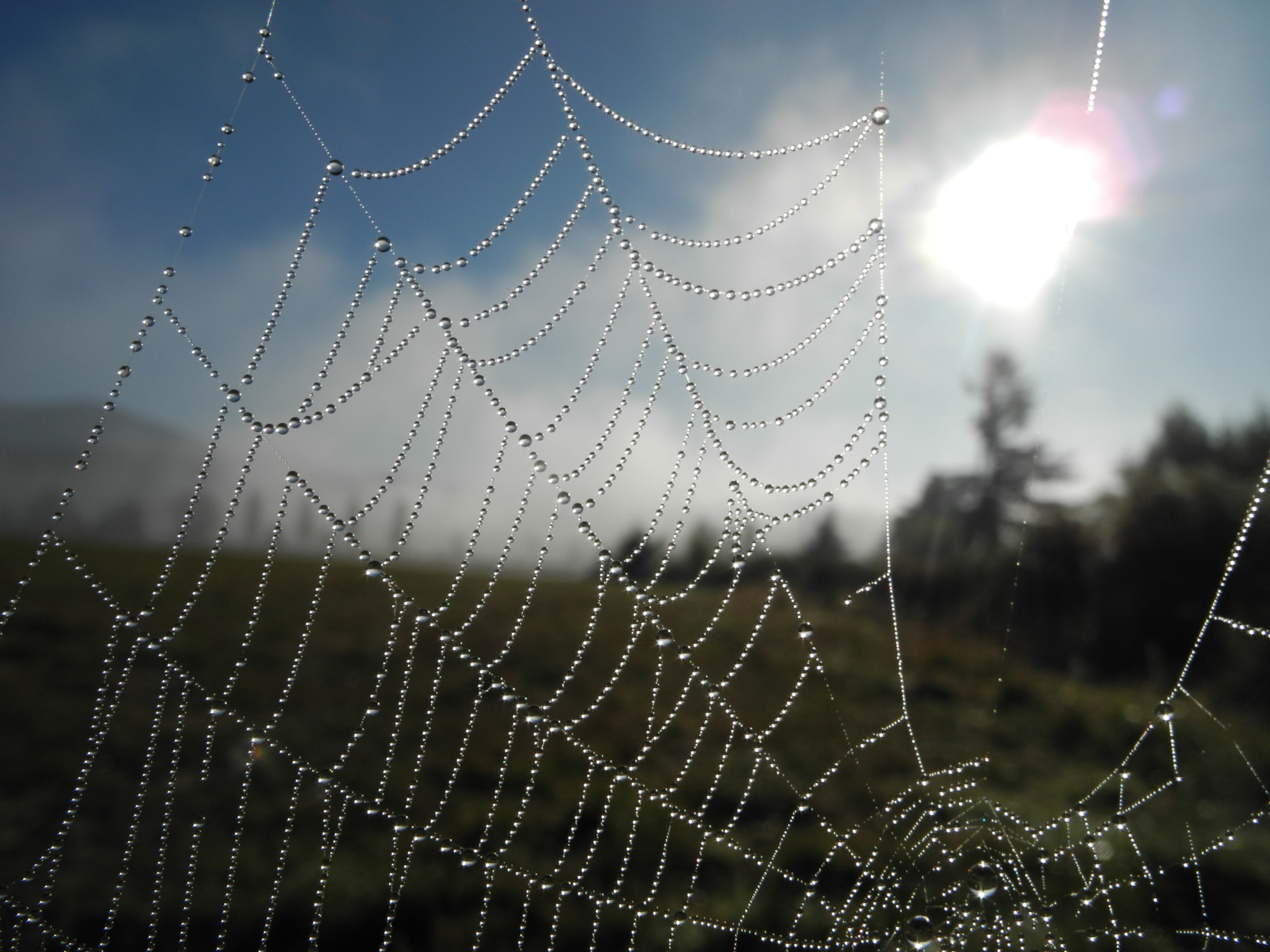 Photograph Fall Web by Kerry Nobbs on 500px