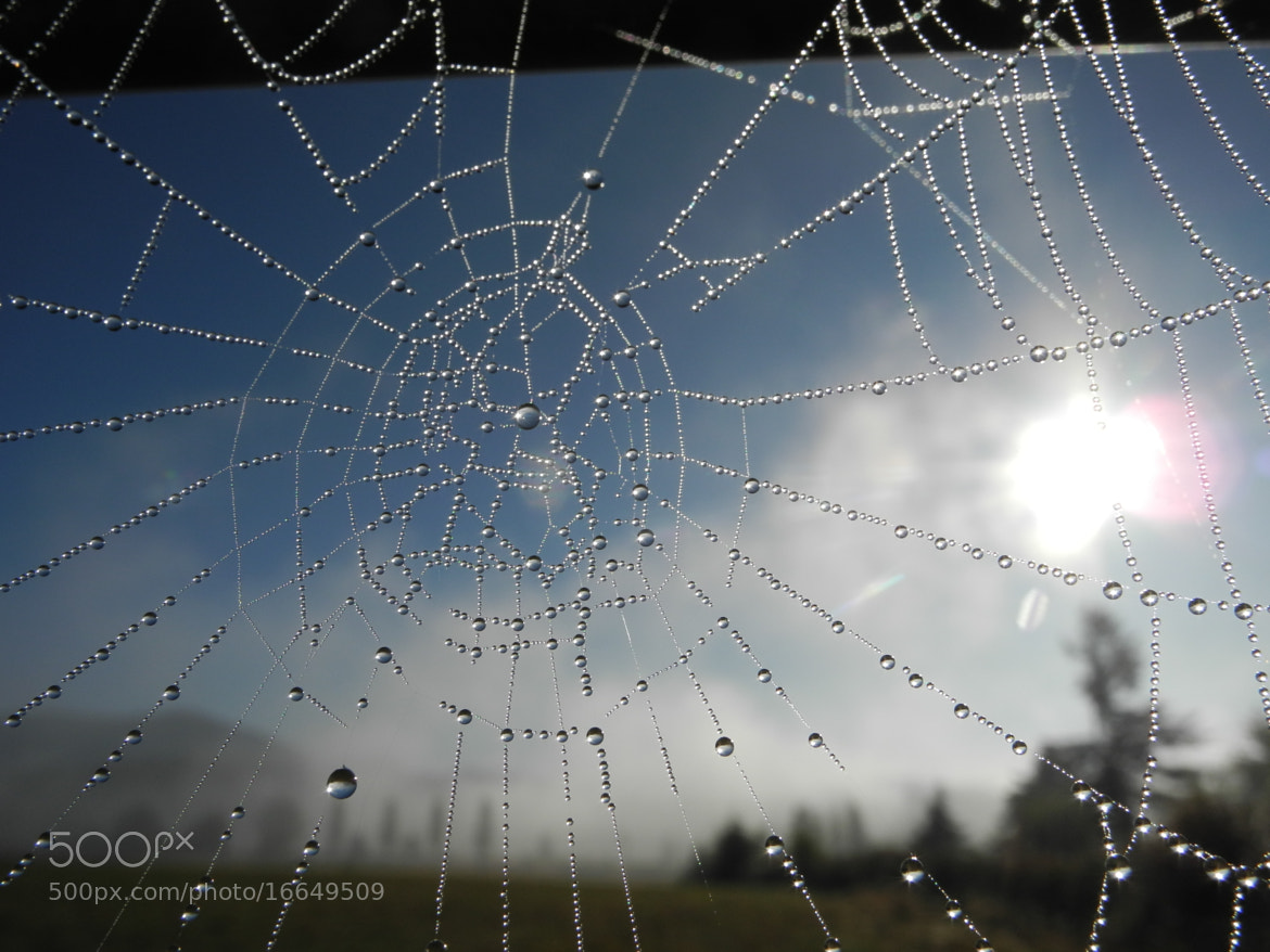 Photograph Fall Web 2 by Kerry Nobbs on 500px