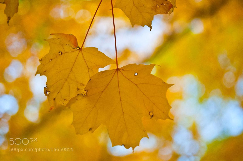 Photograph Golden Sunshine by Neha Bhaskar on 500px