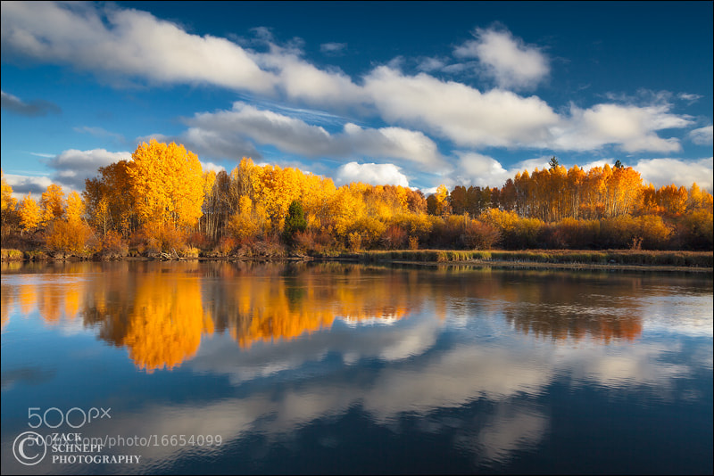 Photograph Gold and Blue by Zack Schnepf on 500px