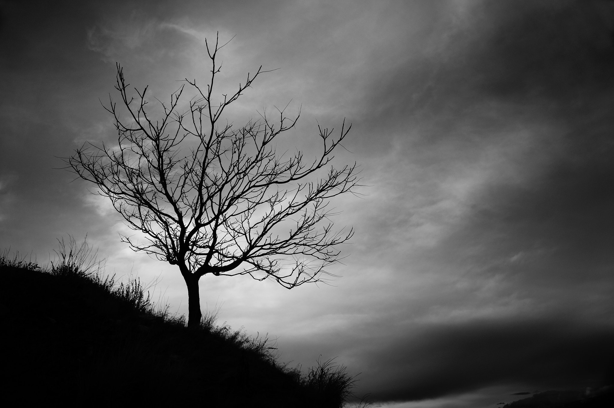 Photograph Stormy Tree by Chris Eaves on 500px