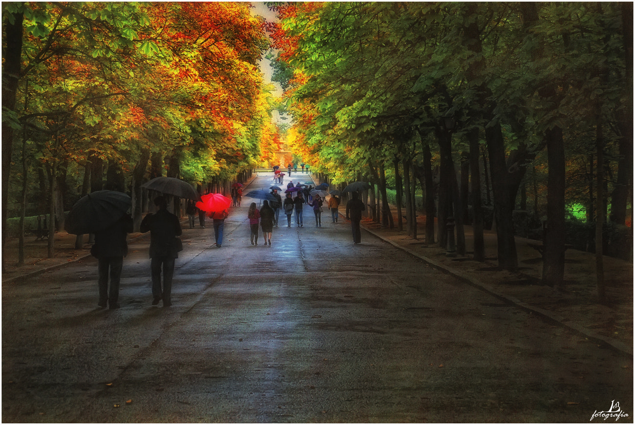 Photograph A beautiful day for umbrellas by Manuel Lancha on 500px