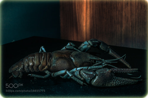 Photograph Crayfish 3 by Ian Anglin on 500px