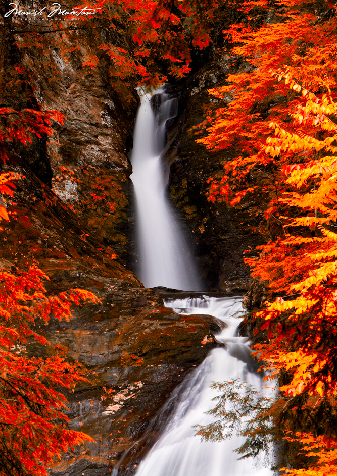 Photograph The Fall Colors by Manish Mamtani on 500px