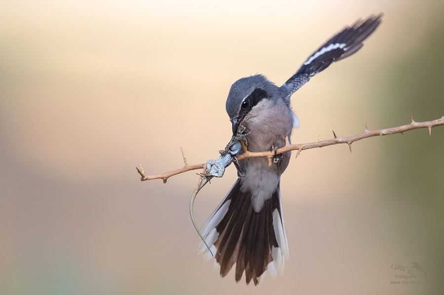 Photograph spike by Marion Vollborn on 500px