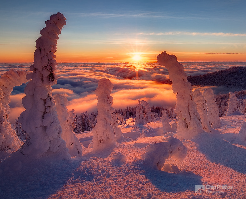 Photograph Tree Henge by Chip Phillips on 500px