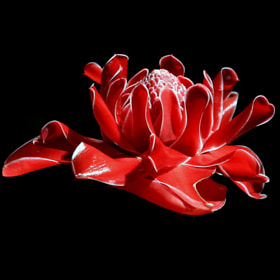 Torch Ginger Flower  by Gorn's Photography  (doimanchiangmai)) on 500px.com