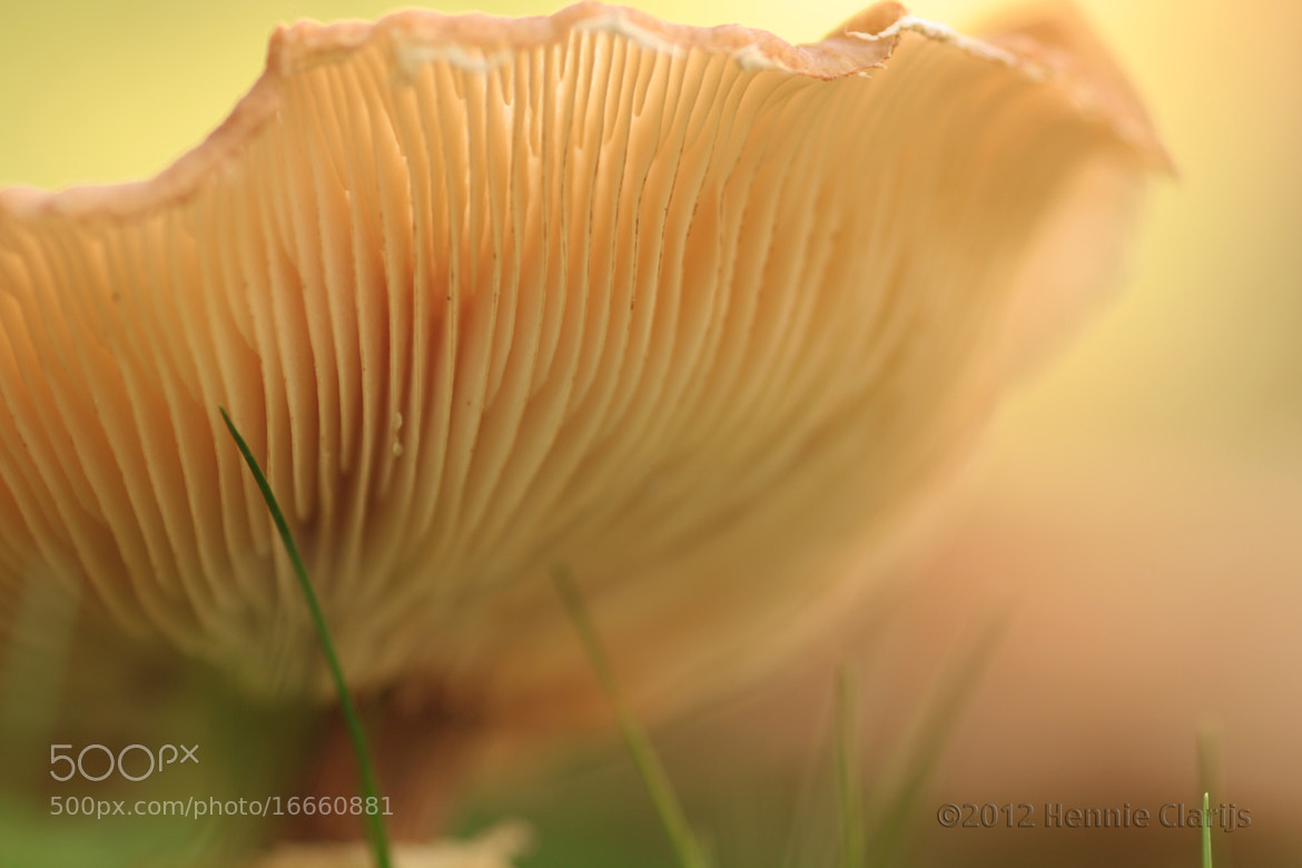 Photograph Mushroom time again by Hennie Clarijs on 500px