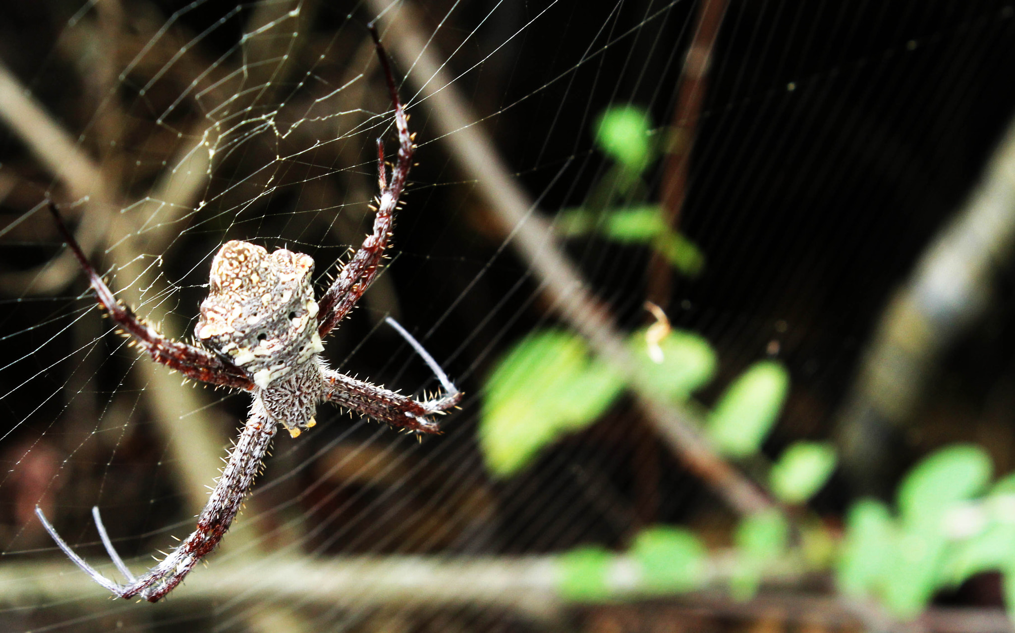 Photograph Spider by Yosua A Linata on 500px