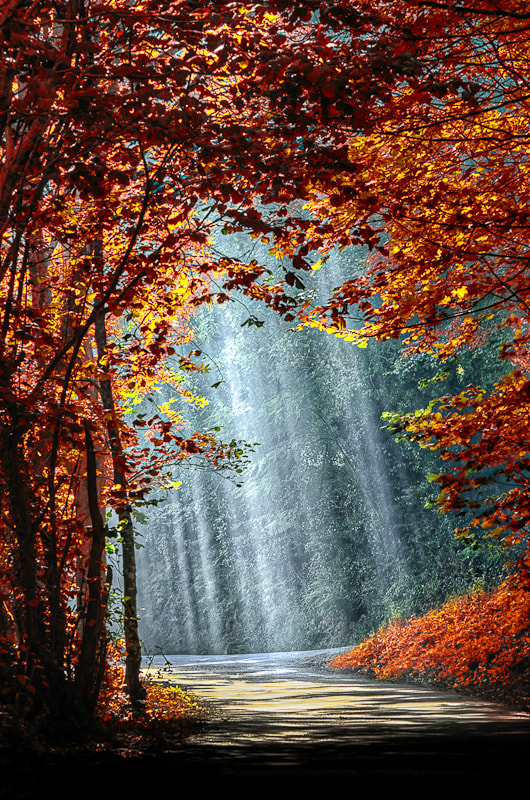 Photograph Autumn is coming *  by BLOAS Meven on 500px