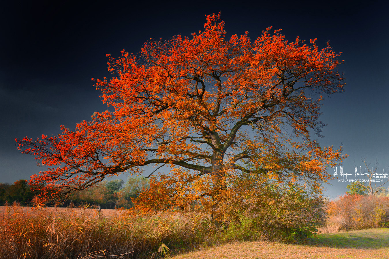 Photograph Melancholy Tree by Philippe Sainte-Laudy on 500px