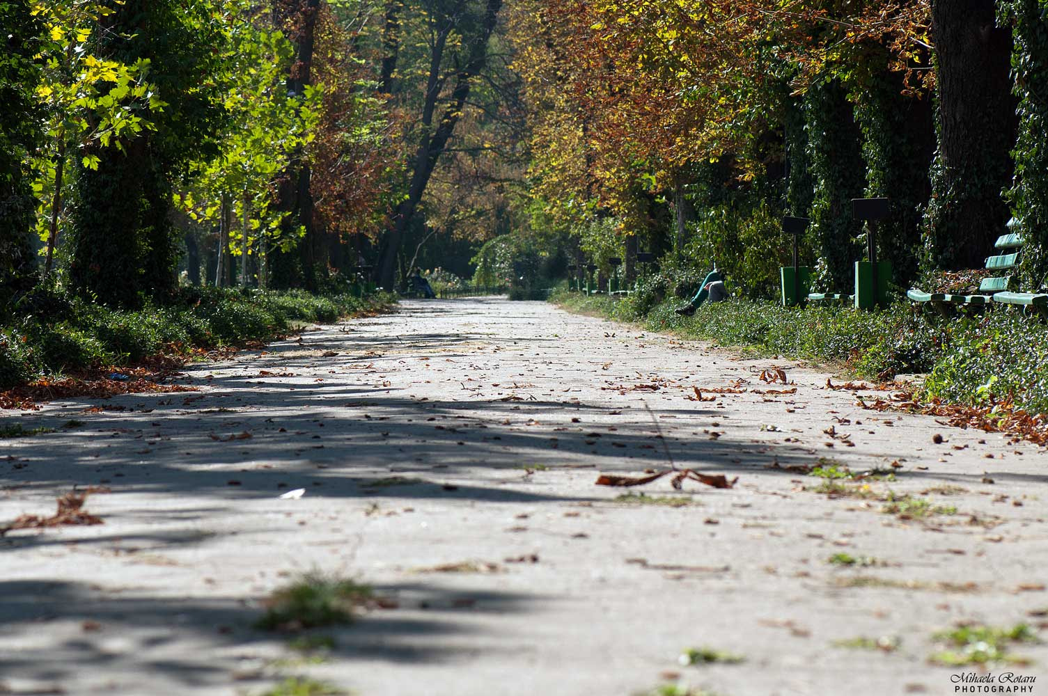 Photograph The path by Mihaela Rotaru on 500px