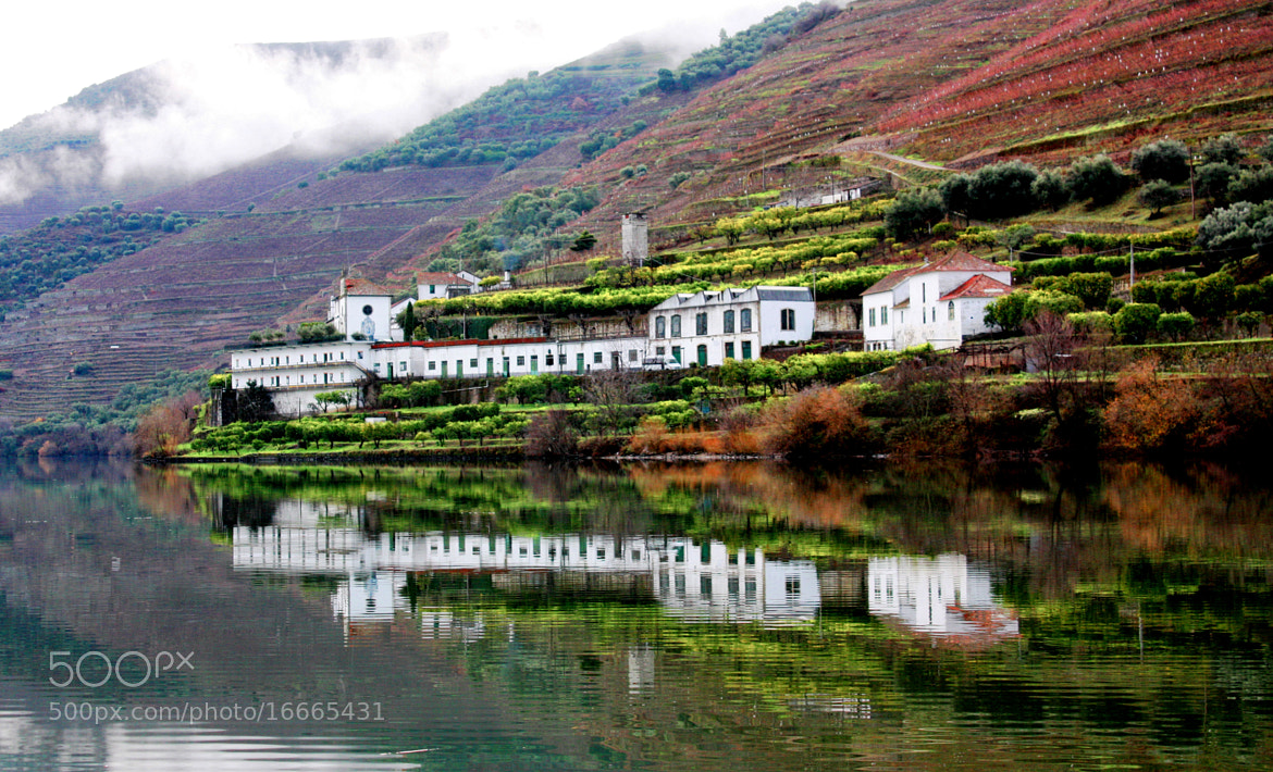 Photograph Autumn in the Douro River  by Analua Zoé on 500px